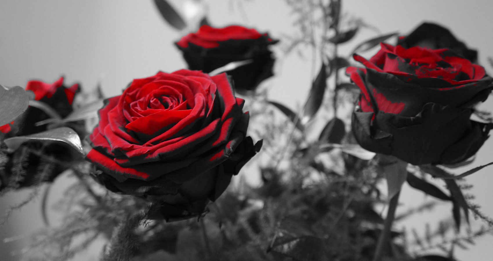 Roses Are Red, a poem written by Lisa Keeble at Spillwords.com