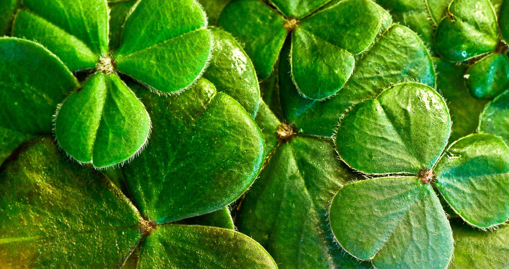 St. Patrick's Day, a poem by Eliza Cook at Spillwords.com