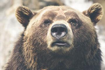The Legend Of The Little Bear From Braşov, by Cornelia Paun Heinzel at Spillwords.com