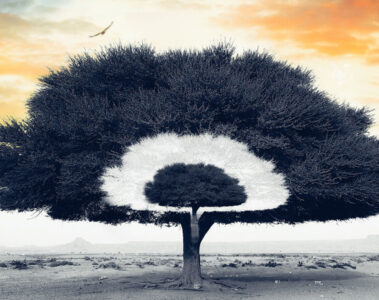 The Poet Tree, poetry written by KL Merchant at Spillwords.com