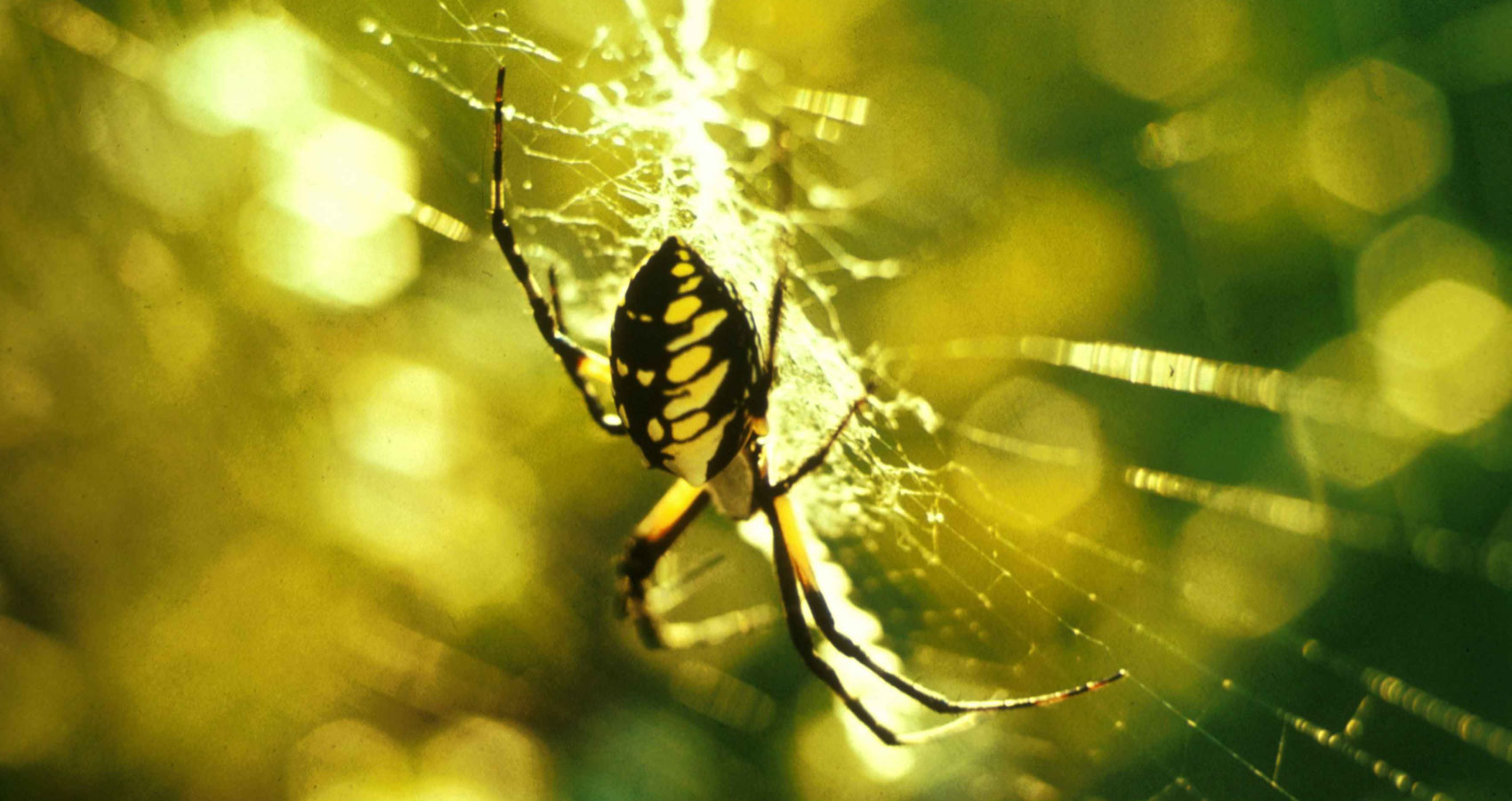 The Spider's Kiss, poetry written by Art Blacktooth at Spillwords.com