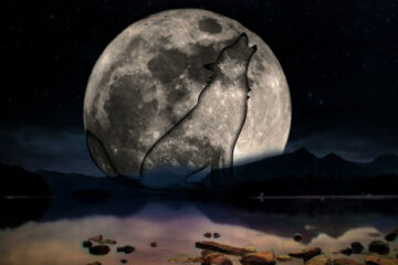 The Wolf and The Moon, written by Laura Hughes at Spillwords.com