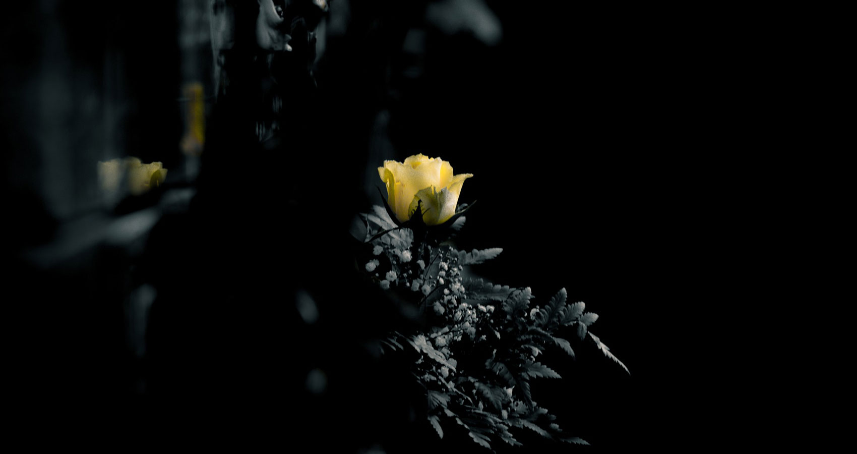 A Graveyard Full of Roses, written by Neeraj Kumar at Spillwords.com