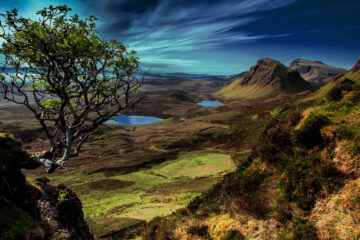 Beneath The Rowan Tree, poetry written by Camille at Spillwords.com