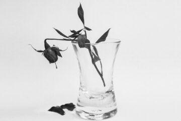 Falling Petals, a haiku written by Billy Antonio at Spillwords.com