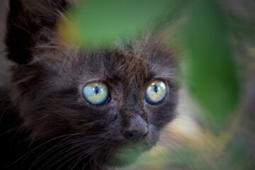 Fifi's Kitty, a poem written by Rohini KB Reddy at Spillwords.com