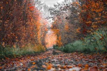 Seasons, poetry written by Ron Kempton at Spillwords.com