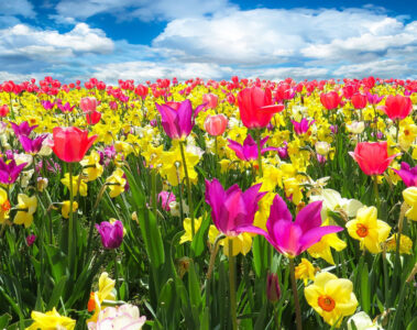Spring Time, a poem written by Alisa Guttadauro at Spillwords.com