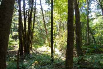 Solitude In The Woods, written by Gayl Wright at Spillwords.com