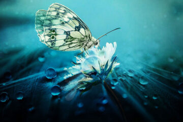 Spring in Wings, poetry written by Aida at Spillwords.com