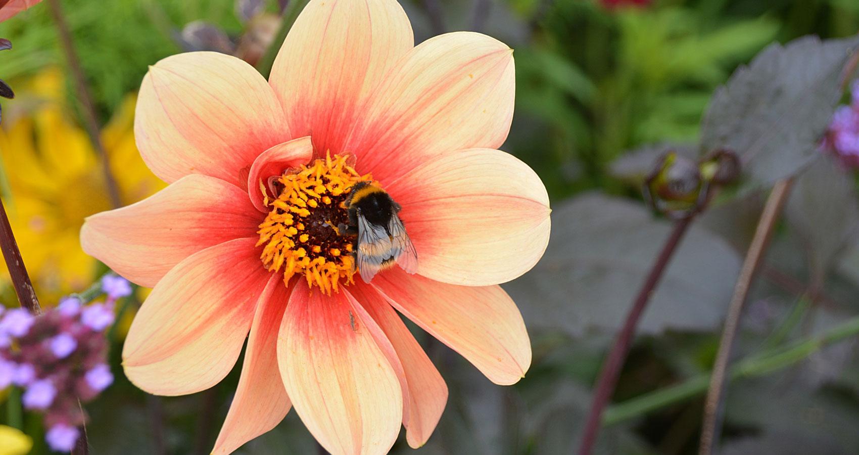 The Gaze of A Flower, a poem written by Guna Moran at Spillwords.com