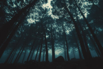Things Of The Forest, written by Baidha Fercoq at Spilwords.com