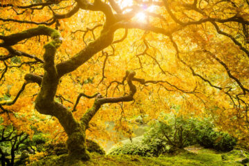 Tree, a haiku written by Bene Kusendila at Spillwords.com