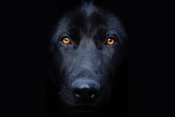 BLACK DOG NIPPING, micropoetry by Leanne Neill at Spillwords.com