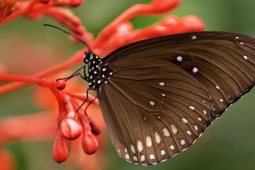 Butterflies Drink Blood, by Doran Blake Hutchinson at Spillwords.com