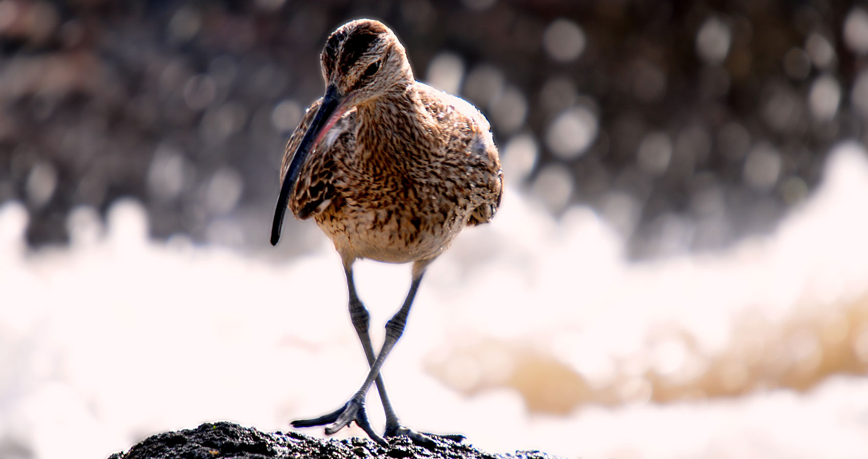Curlews, micropoetry written by Polly Oliver at Spillwords.com