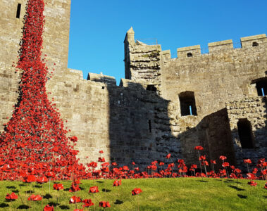 Poppies On Ludlow Castle, poetry by Willa Cather at Spillwords.com