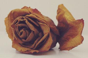 Dowry, a haiku written by Arnab Kumar Roy at Spillwords.com