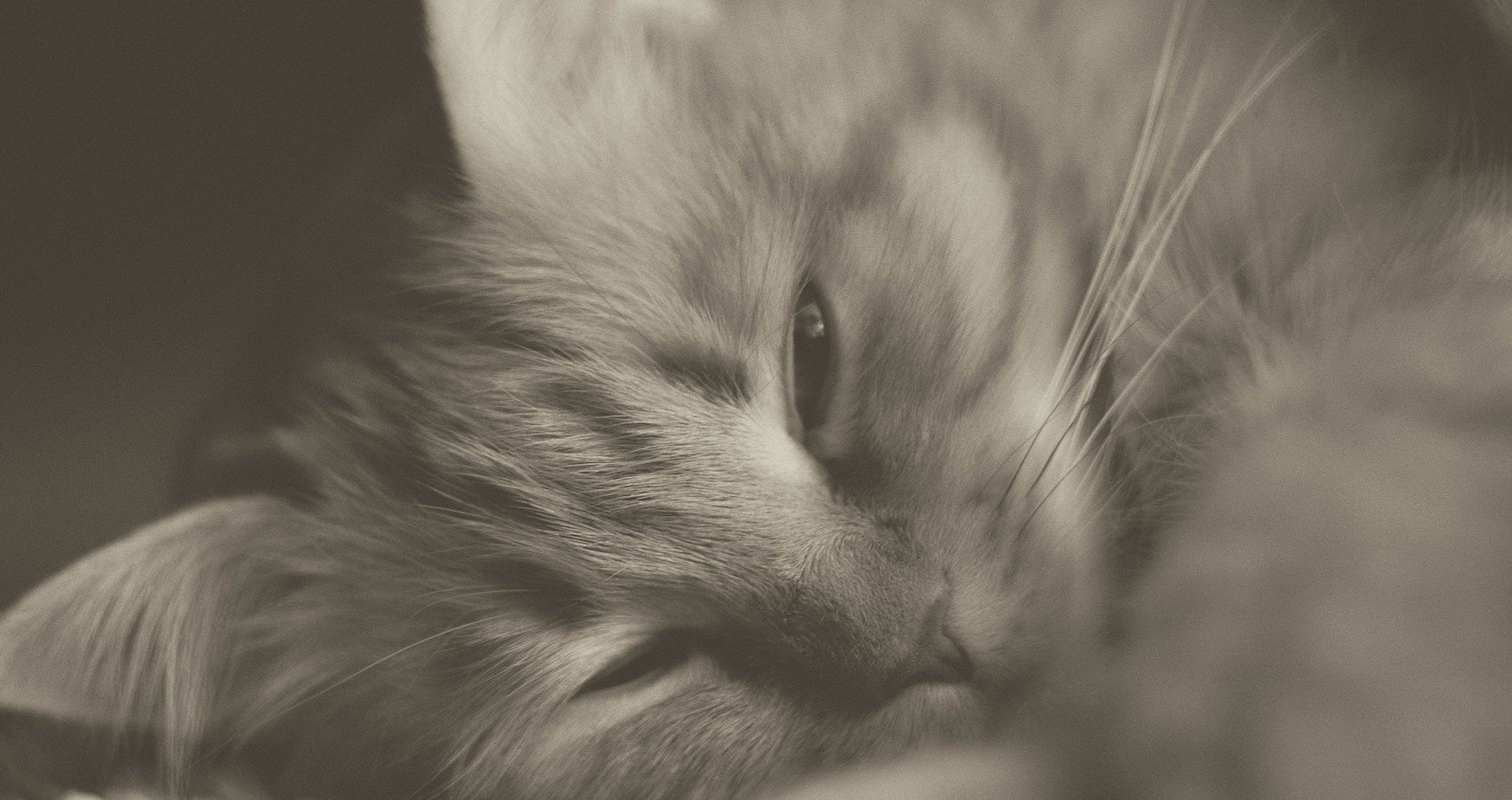 Missy The Cat's Diary, Sunday 10th of March 2019, short story written by Andrew Scobie at Spillwords.com