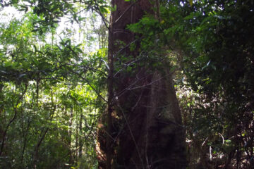 Rainforest Song, a poem written by Mark Scrivener at Spillwords.com