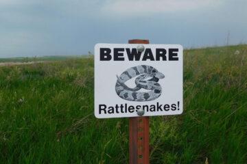 Rattlesnake, a haiku written by Cindy Medina at Spillwords.com