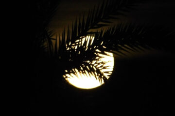 The Moon, a poem written by lulia Halatz at Spillwords.com