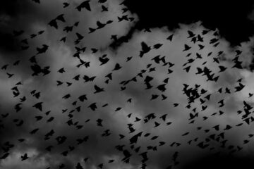 A Thousand Shades of Black, poetry by Jerry Langdon at Spillwords.com