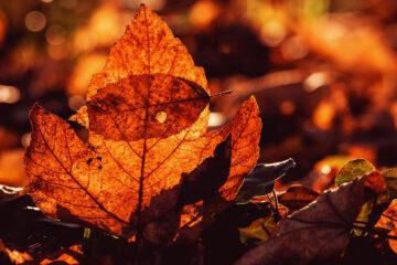 Autumn, a poem written by JOHN BAVERSTOCK at Spillwords.com