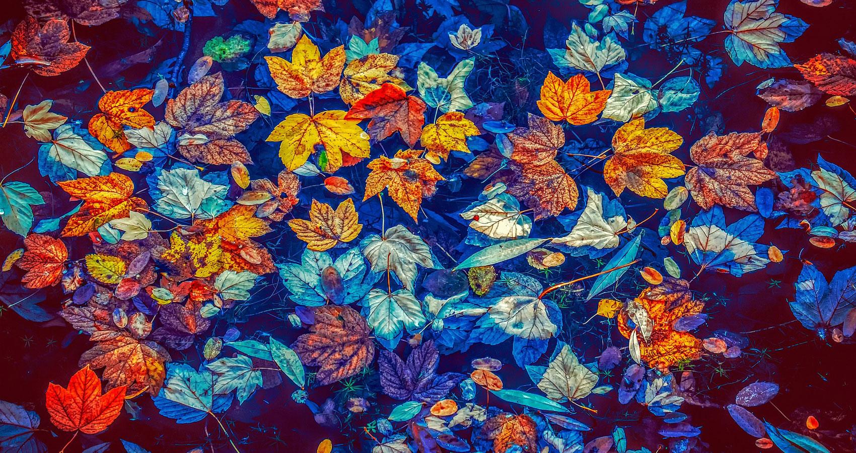 To Autumn, a poem written by John Keats at Spillwords.com