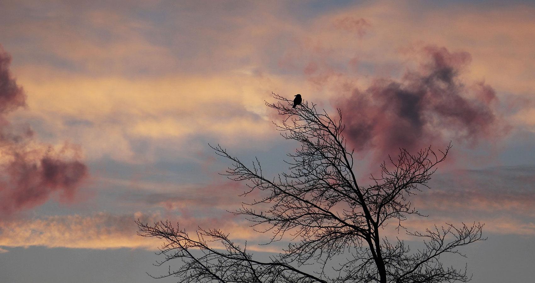 Wounded Bird, a poem written by Mountassir Aziz at Spillwords.com
