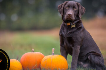 Dog's Take on Halloween, poetry written by N. K. Hasen at Spillwords.com