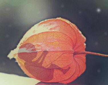 Echoes, a poem written by Gigi Balita at Spillwords.com