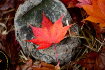 MABON, micropoetry written by R.M. Engelhardt at Spillwords.com