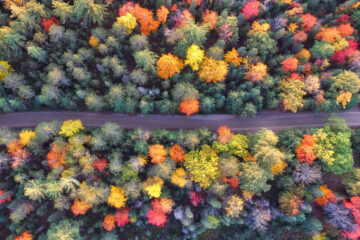 Patches of Color, a poem written by Anne G at Spillwords.com