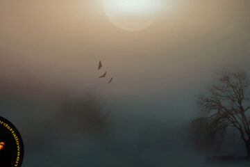 Spooky Festivities, poetry by Franci Eugenia Hoffman at Spillwords.com