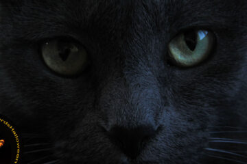 The Dark Kitty, micropoetry by Edward Donnelly at Spillwords.com