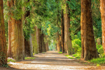 The Trees, poetry written by Maria Dulce Leitão Reis at Spillwords.com