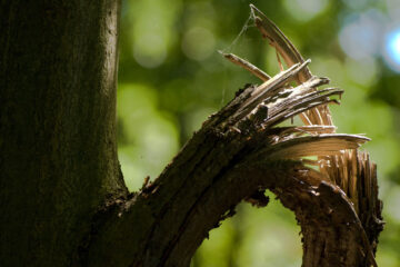And The Bough Will Break, poetry by Tammy M Darby at Spillwords.com
