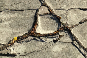 Cracked Concrete Can Still Grow Weeds, prose by Kerri Caldwell at Spillwords.com