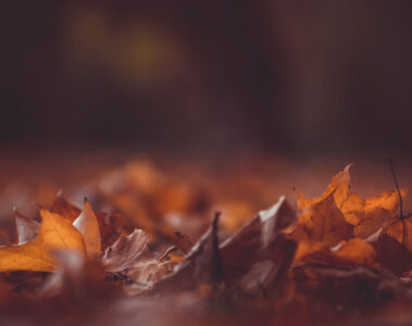 October Leaving, poetry written by John Ryder at Spillwords.com