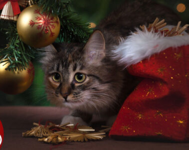 CHRISTMAS WITH CATS, poetry by Dianne Moritz at Spillwords.com