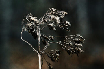 Dead Flora, Dying Fauna, poetry written by Lei Writses at Spillwords.com