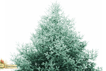 My Christmas Tree, free verse written by Papia Ray at Spillwords.com