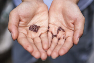 SEARCHING FOR THE SEED, a poem written by Dilip Mohapatra at Spillwords.com
