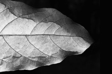 Hear The Leaf's Whisper, a poem by Agnieszka Kuśmierczuk at Spillwords.com