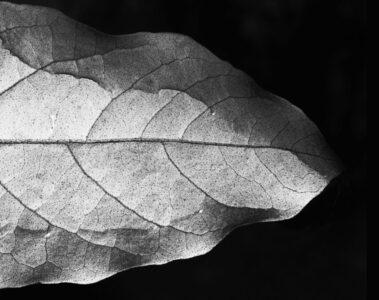 Hear The Leaf's Whisper, a poem by Agnieszka Kuśmierczuk at Spillwords.com