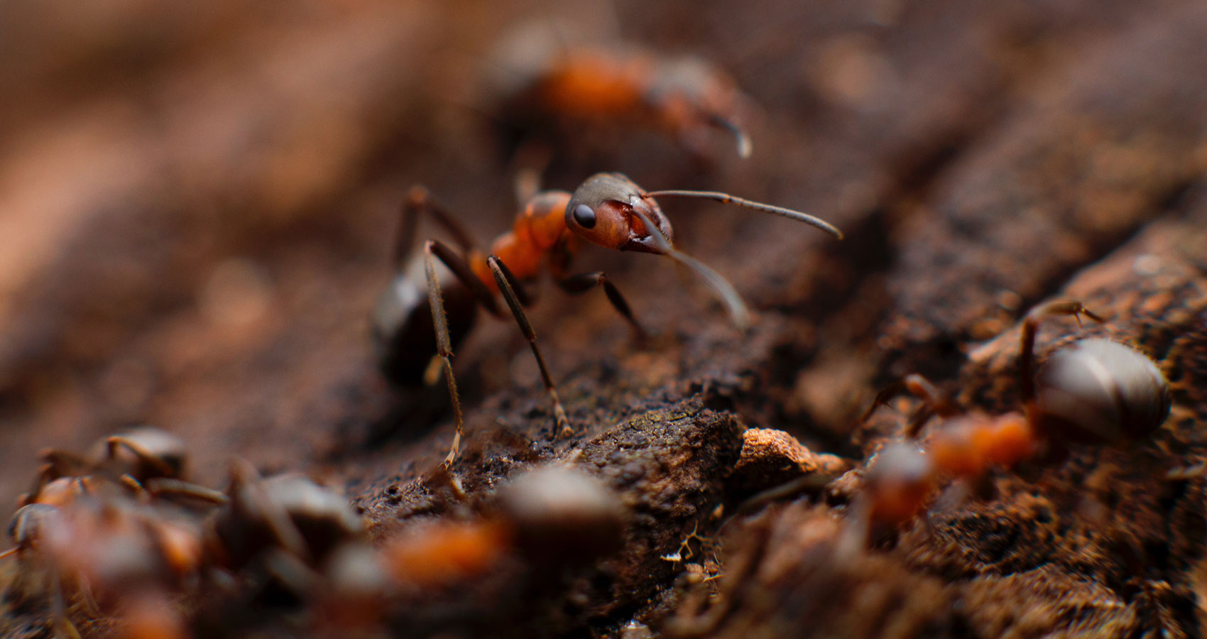 Of Ants and Men, flash fiction written by P.C. Darkcliff at Spillwords.com
