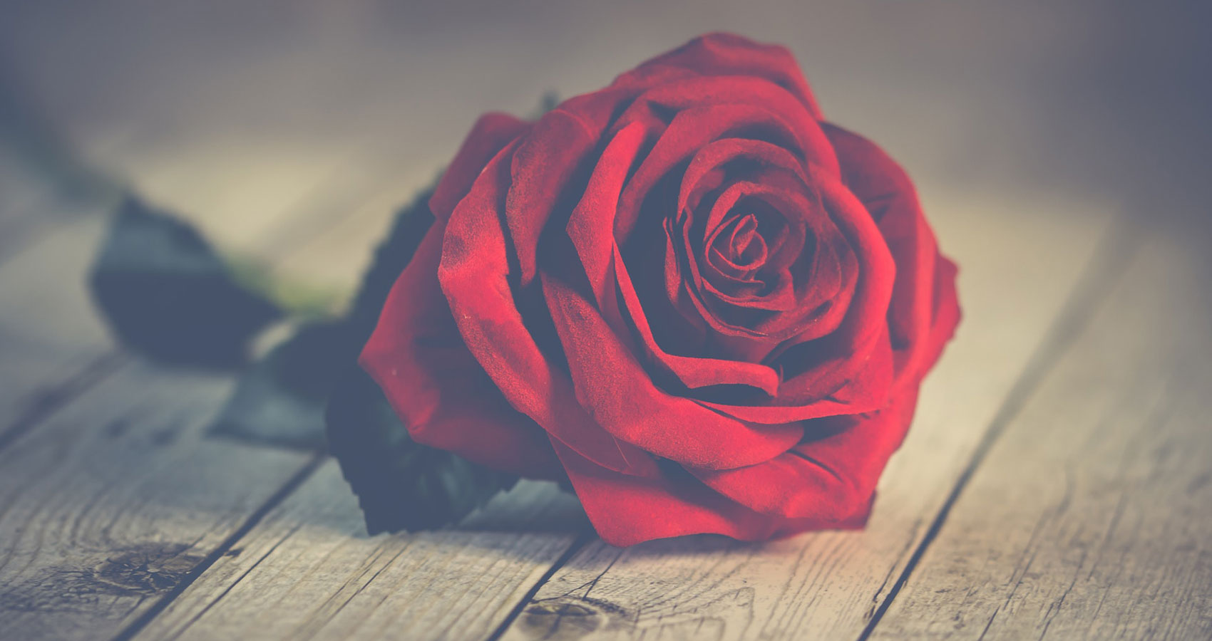On Valentine's Day, a poem written by Sonali Majumdar at Spillwords.com