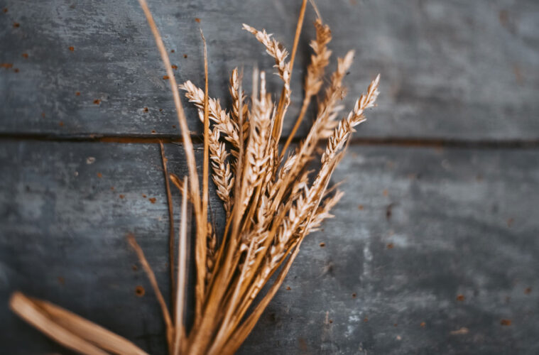 Wheat From The Chaff, micropoetry by Katie Lewington at Spillwords.com