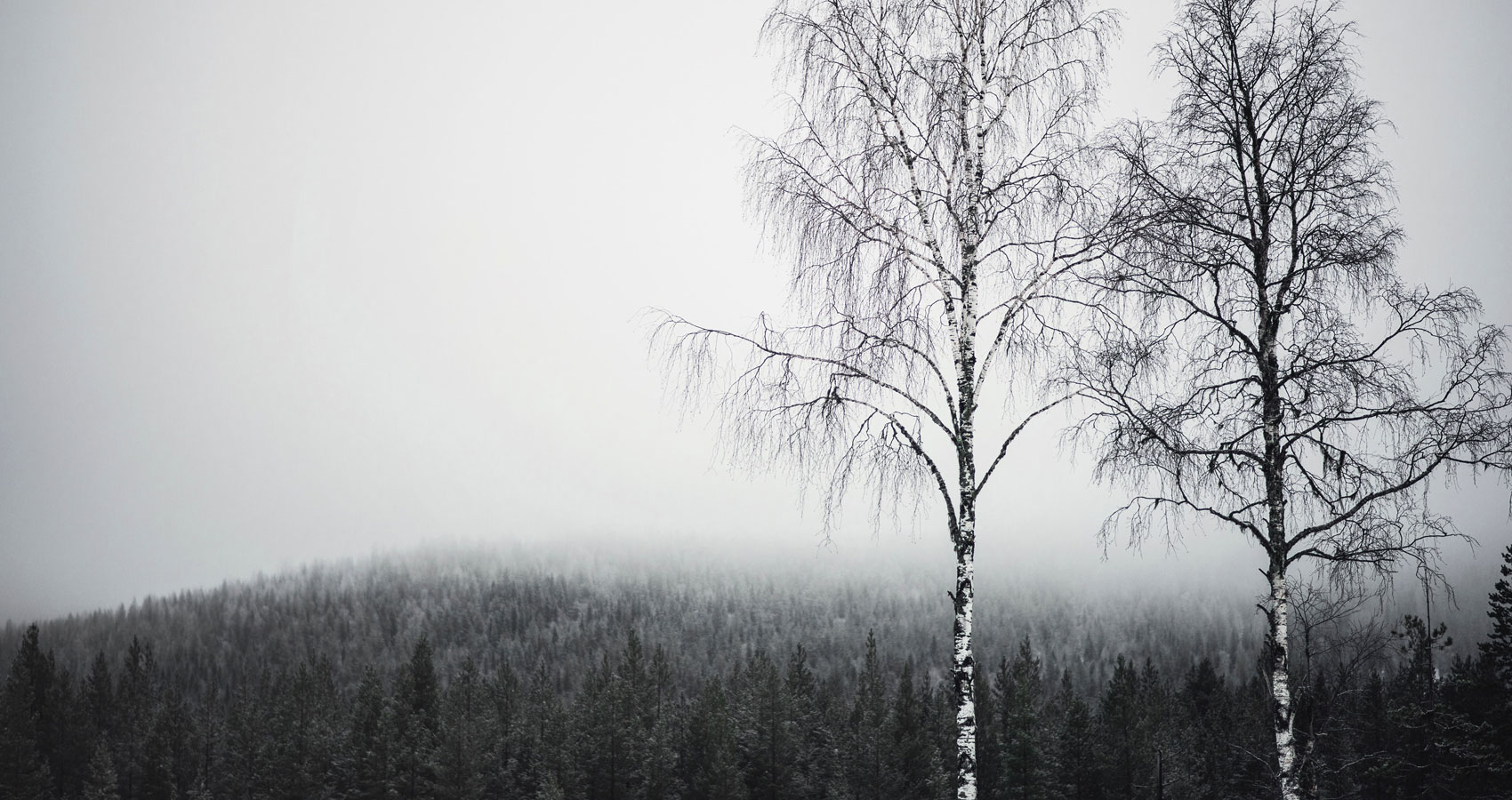 Birches, a poem written by Robert Frost at Spillwords.com